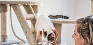 Remek macska napközi várja kiskedvencét!