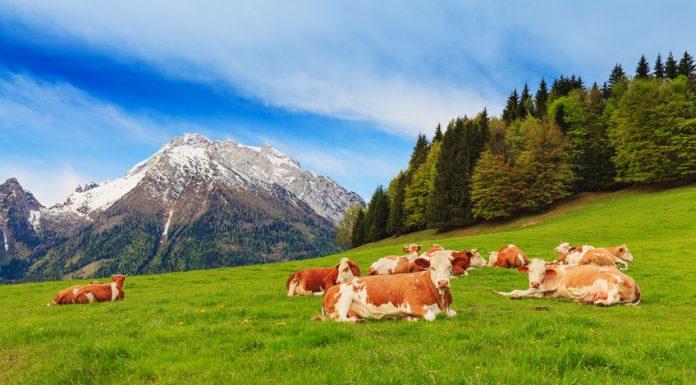 Ausztriában szállás olcsón